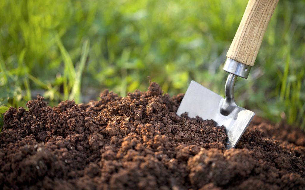 Organic-seed