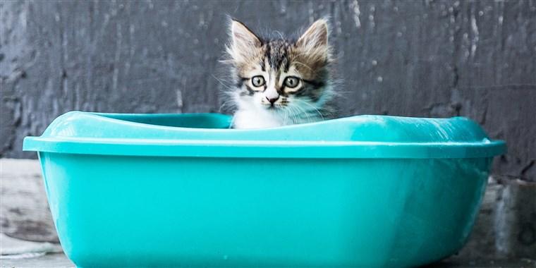 best litter box for cats